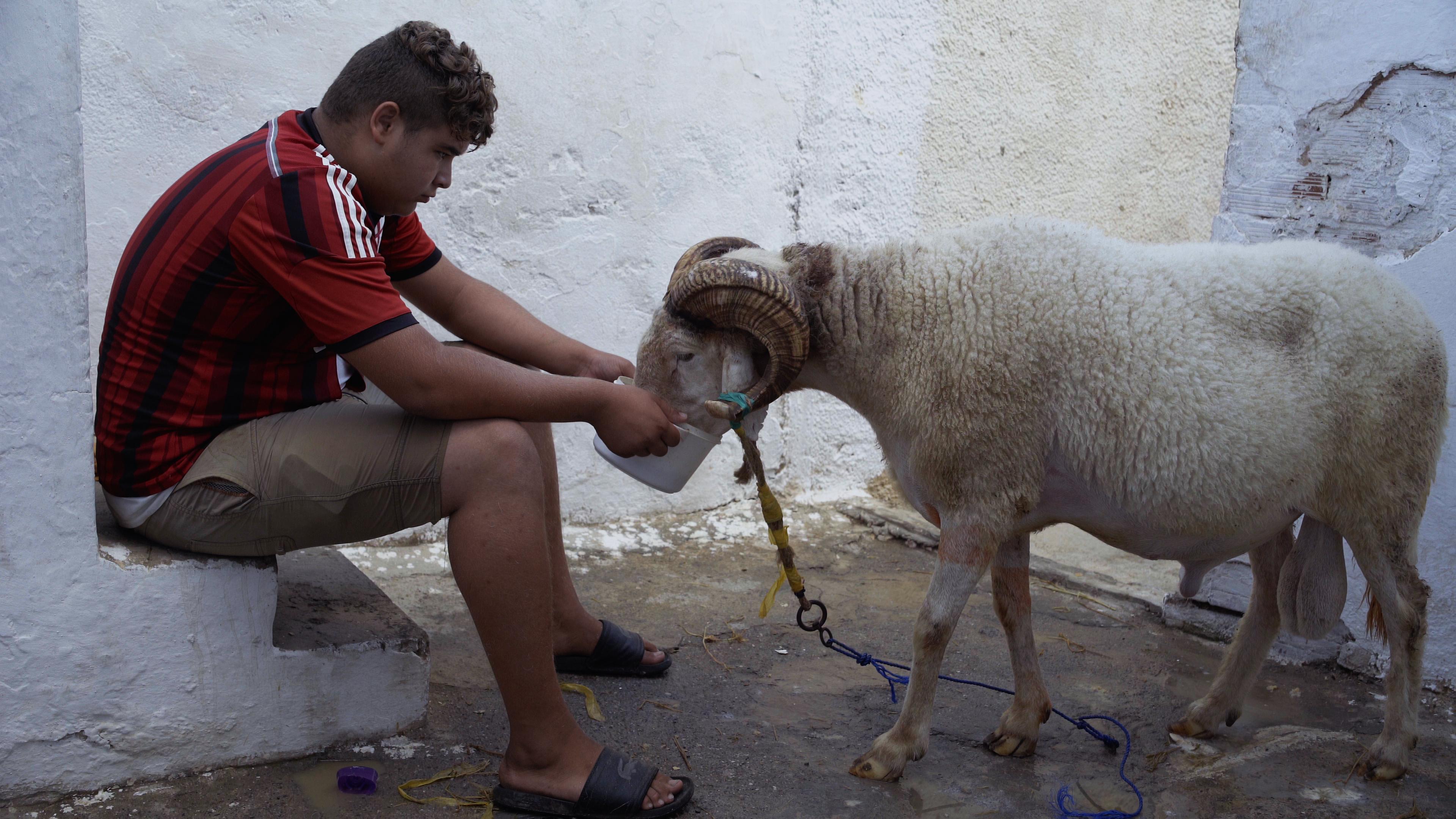 «كباش ورجال»: شبّاك على جزائر منسيّ